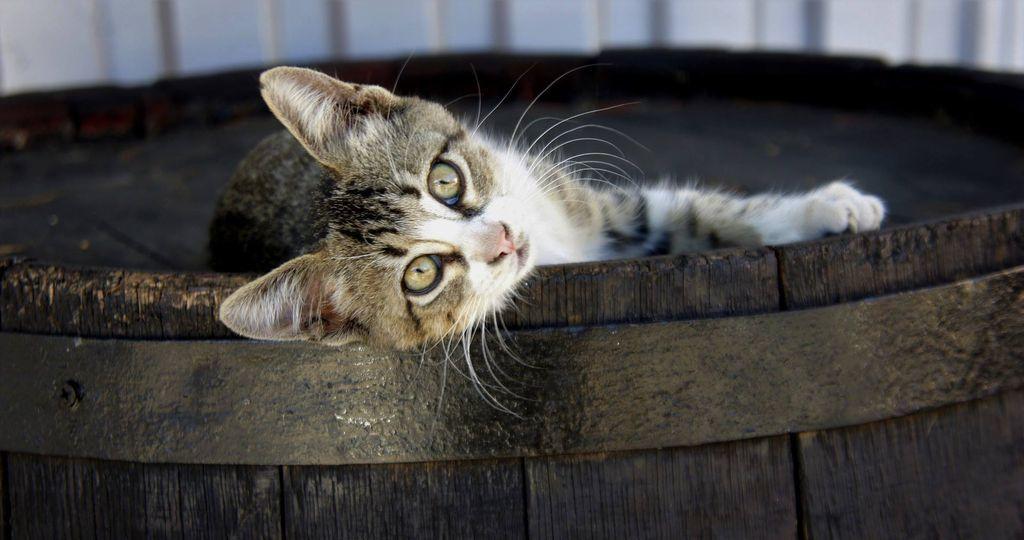 slide-cica